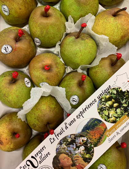 French Passe Crassane Pears